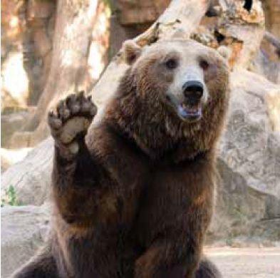 lienzo cuadros con osos
