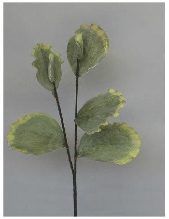 Vara Hoja Lotus Verde